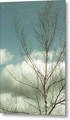 Metal Print featuring the photograph Cloudy Blue Sky Through Tree Top No 2 by Ben and Raisa Gertsberg