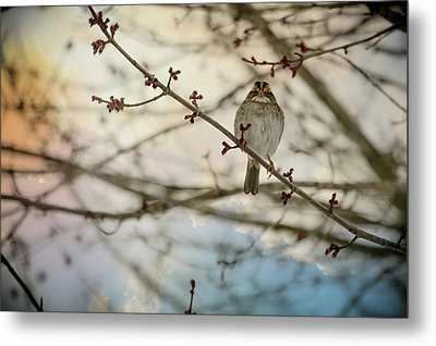 Metal Print featuring the photograph Cloudy Finch by Trish Tritz