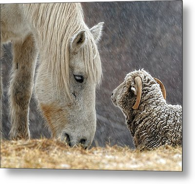 Clouseau And Friend Metal Print by Don Schroder