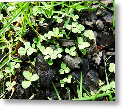 Clover Metal Print by Anna Villarreal Garbis