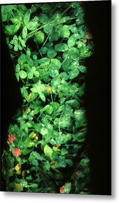 Clover Metal Print by Arla Patch