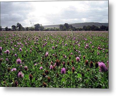 Clover Field Wiltshire England Metal Print by Kurt Van Wagner