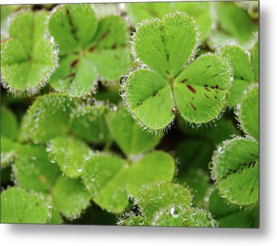 Cloverland Frosted Over Metal Print