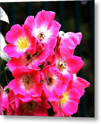 Cluster Metal Print by Gerald Mitchell