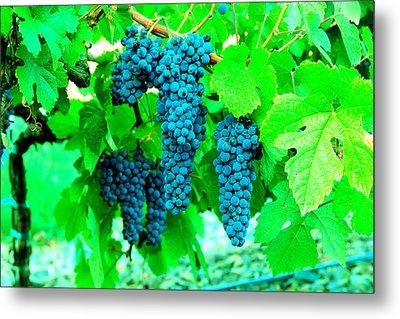 Cluster Of Wine Grapes Metal Print by Jeff Swan