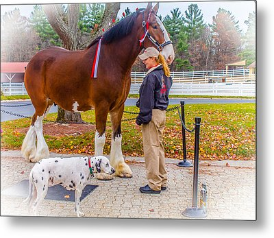 Clydesdale With Handler And His Companion Metal Print