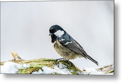 Metal Print featuring the photograph Coal Tit's Profile by Torbjorn Swenelius
