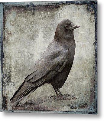 Coastal Crow Metal Print by Carol Leigh