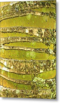 Coconut Palm Bark 1 Metal Print by Brandon Tabiolo - Printscapes