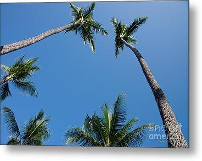 Coconut Palms Metal Print