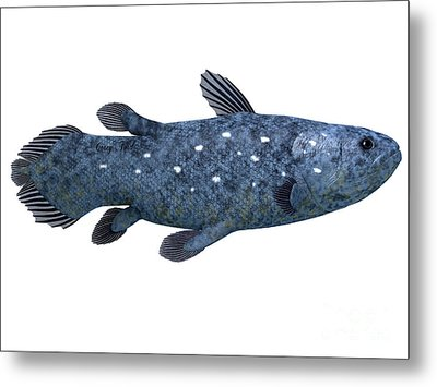 Coelacanth Fish On White Metal Print by Corey Ford