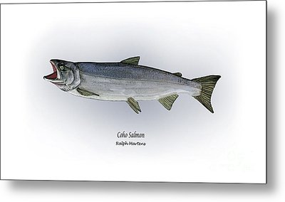 Coho Salmon Metal Print by Ralph Martens