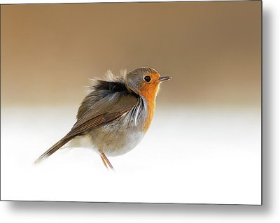 Cold Feet II - Little Red Robin In The Snow Metal Print