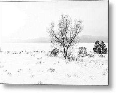 Cold Loneliness Metal Print