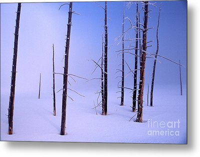 Metal Print featuring the photograph Cold Morning by Edward R Wisell