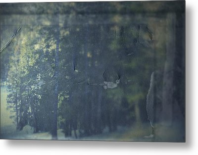 Collect Metal Print by Mark Ross