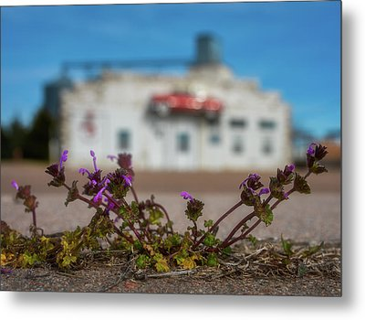 Collyer Sidewalk Blooms Metal Print by Darren White