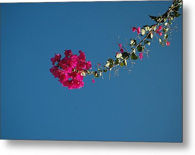 Color And Sky Metal Print by Jean Booth