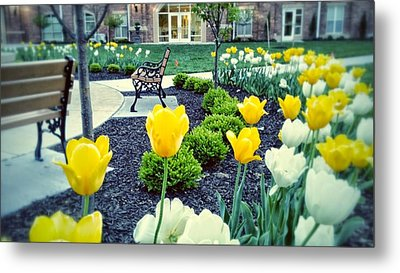 Color At College Metal Print by Dustin Soph