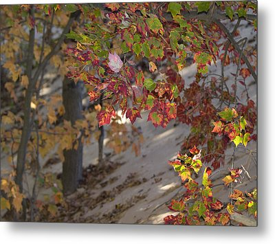 Color In The Dunes Metal Print
