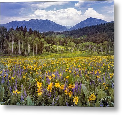 Color Of Spring Metal Print by Leland D Howard