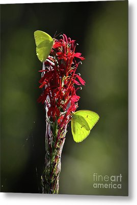 Metal Print featuring the photograph Color On Citico by Douglas Stucky
