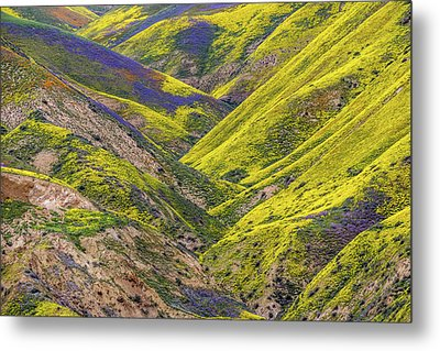 Metal Print featuring the photograph Color Valley by Peter Tellone