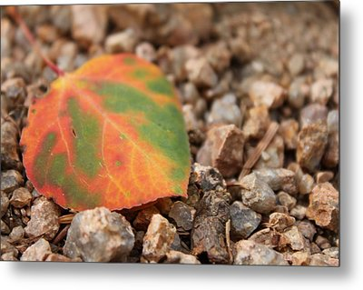 Metal Print featuring the photograph Colorado Fall Colors by Christin Brodie