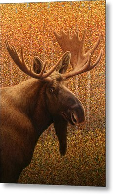 Colorado Moose Metal Print by James W Johnson