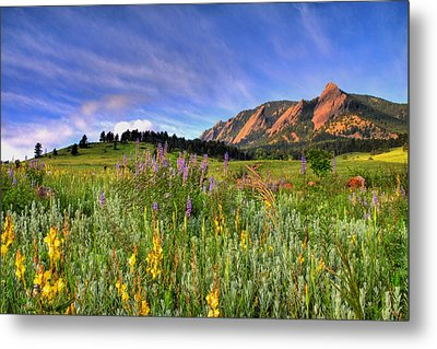 Colorado Wildflowers Metal Print by Scott Mahon