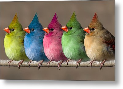 Colored Chicks Metal Print