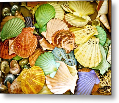 Colored Shells Metal Print by Marilyn Hunt