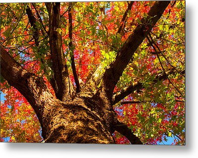 Colorful Autumn Abstract Metal Print