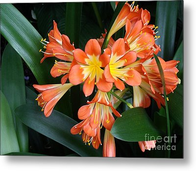 Colorful Beauties Metal Print by Donna Parlow