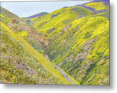 Metal Print featuring the photograph Colorful Canyon by Marc Crumpler
