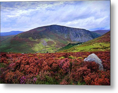 Metal Print featuring the photograph Colorful Carpet Of Wicklow Hills by Jenny Rainbow