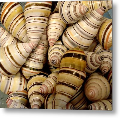 Metal Print featuring the photograph Colorful Cream And Tan Shells by Rosalie Scanlon