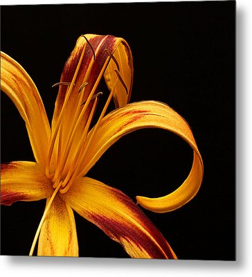Metal Print featuring the photograph Colorful Curls by Judy Vincent