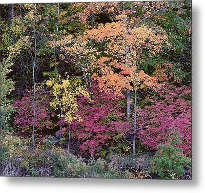 Colorful Fall Foliage Metal Print