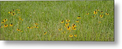 Metal Print featuring the photograph Colorful Field by Wanda Krack