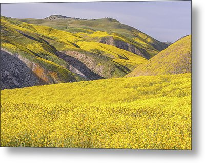 Metal Print featuring the photograph Colorful Hill And Golden Field by Marc Crumpler