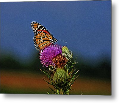 Metal Print featuring the photograph Colorful Monarch by Sandy Keeton