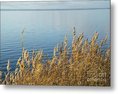 Colorful Reeds Metal Print