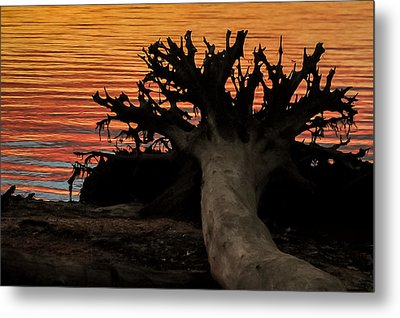Colorful Roots Metal Print by Terry DeLuco