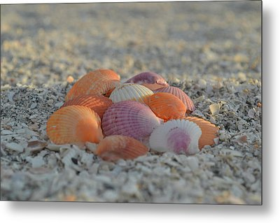 Metal Print featuring the photograph Colorful Scallop Shells by Melanie Moraga