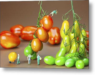 Metal Print featuring the photograph Colorful Tomato Harvest Little People On Food by Paul Ge