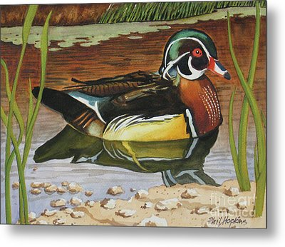 Colorful Wood Duck Metal Print by Phil Hopkins