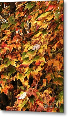 Colors Of Autumn Metal Print by John Rizzuto