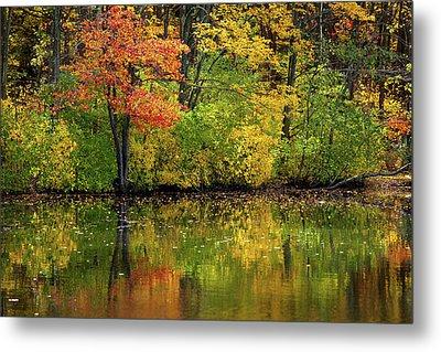 Colors Of Autumn Metal Print by Karol Livote