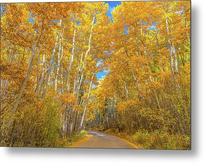 Metal Print featuring the photograph Colors Of Fall by Darren White
